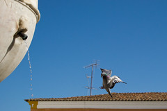 Av_003 (Luis GA) Tags: paloma aves highspeed altavelocidad