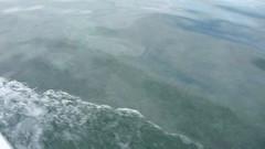 P1020421 (pbinder) Tags: beach island paradise may atlantis mon monday bahamas paradiseisland 2012 201205 paradiseislandbahamas 20120521