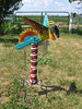 IMG_4815 (chocmonk) Tags: bird pheonix