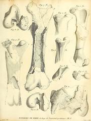 n224_w1150 (BioDivLibrary) Tags: france paleontology geology smithsonianinstitutionlibraries parisregion mammalsfossil vertebratesfossil bhl:page=40078368 dc:identifier=httpbiodiversitylibraryorgpage40078368 fossilstories