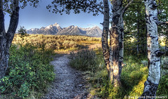Path to the Cathedral (Tom Lussier Photography) Tags: usa mountain tree forest sunrise landscape nationalpark nikon path rockymountains wyoming moran grandtetonnationalpark grandtetonnationalparkwyoming tomlussier tpslandscape