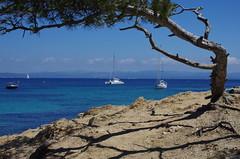 IMGP6601 (vivosi8) Tags: sea mer france 35mm island pentax ile 83 var k5 f20 porquerolles mditerranne