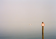 Man in a boat (Guillermo Murcia) Tags: lake film canon germany gold switzerland boat europe kodak ae1 rorschach constance bodense nearstgallen guillermomurcia