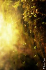 Deep inside the enchanted forest (AlexanderArntsen now over 400.000 views) Tags: flowers light wild summer flower colour green art nature beauty closeup forest photoshop manipulated wonderful landscape outdoors photography eos leaf spring fantastic flickr moments poetry peace forrest artistic sweden outdoor wildlife magic ngc natur sigma peaceful poetic divine blad fantasy skog dreamy nordic sverige leafs magical soe lanscape geographic springtime autofocus enviroment coulorful löv flickrs 1850mm supershot thegalaxy natureswonder flickraward naturemasterclass brigettes 1000d eos1000d mygearandme natureskingdom allnaturesparadise flickrstruereflection1 bbng alexanderarntsen photobyarntsen rememberthatmomentlevel1