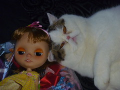 Don't you just love it when your pets love your dollies as much as you?!!