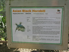 malaysia kualalumpur hornbill tropicalbirds klbirdpark kualalumpurbirdpark asianblackhornbill walkinaviary tamanburung kllakegardens worldslargestcoveredaviary