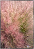 Windblown Grasses #2 (Chris Laforêt) Tags: wind windy grasses windblown swishy colorefex viveza nikond700 purpletoppedgrasses