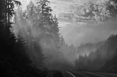 Hwy 101 Where Light, Mist, and Forest Meet (tacoma290) Tags: road light bw mist fog mystery forest dark washington nikon highway veil pacificnorthwest curve drama pnw shafts highway101 loggingroad naselle hwy101wherelightmistandforestmeet