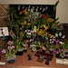 POS Display – Best Orchid Society Exhibit, Batchman Trophy