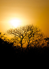 Flames above (VaibhavSharmaPhotography) Tags: trees sun black silhouette yellow fire golden evening afternoon goa surreal sunny rays trippy stark slames
