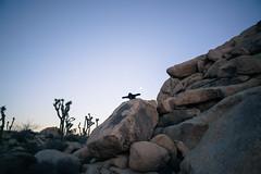 Sad (thedarkerdark) Tags: california sunset nature desert joshuatree surreal albertcamus justgoshoot artofvisuals 24hrchurch wxart