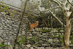 _DSC9936 (Eiran Lapham) Tags: bus church field leaves stone wall cat garden spring phone sheep box wal critique penzance stjust penwith critiquemyphotos