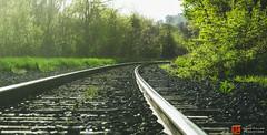 All Rails Lead to... (davidfillion) Tags: railroad tree green lines traintracks railway rails leading hamont sunsethamilton ifttt davidfillionproductions