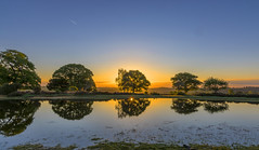 Mogshade Sunrise May 19 (nicklucas2) Tags: cloud sun reflection tree nature water grass sunrise landscape pond contrail newforest hdr