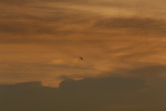 Thy Sea is so Great (Steve Byrne's Pics) Tags: sunset sky clouds science skydiver flickrfriday
