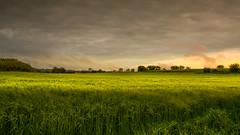 Last light (Adelino Goncalves) Tags: uk blue light sky sun cold nature beautiful clouds landscape spring warm horizon gloucestershire nikond810 ericgoncalves nikon24120f14vr