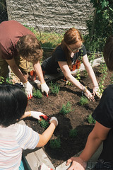 HarlemGrown-25 (United Nations International School) Tags: school students gardening farming volunteer unis composting harlemgrown