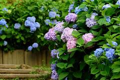 23Yamada Pond Park (anglo10) Tags: flower japan