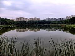 Reflecting at Punggol Park. (brinthaloganathan) Tags: park trees sky lake reflection nature clouds reflections reeds outdoors evening pond singapore flats punggol hdb punggolpark