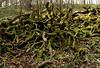 Log Rhythms (Mr Grimesdale) Tags: lancashire parbold fairyglen stevewallace mrgrimesdale