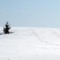 az ég felé / up to the sky (debreczeniemoke) Tags: snow way march path március út gutin hó uptothesky ösvény rozsály canonpowershotsx20is igniş azégfelé