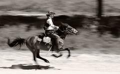 Speed (Nikolay St. Dimitrov - Niko) Tags: horse speed cowboy rider gallop horseman