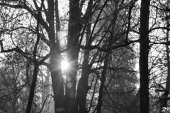 Sun rays (Riccardo Brig Casarico) Tags: morning sunset blackandwhite bw italy sun tree alberi wow photography photo blackwhite reflex nikon italia foto details fantasy dettagli fotografia nikkor atmosfera bianconero biancoenero brig 18105 giorno riki camminare boschi atmosphre d5100 brigrc