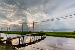Reflected Bridge (MOG'S) Tags: bridge cloud canon landscape wire rice paddy cable drain lee malaysia minimalism ricefield minimalist dong paddyfield selangor mogs sekinchan leefilter malaysialandscape 1635f28 1635f28ii donnietphotography donniephotography dongphotography tanjenndong tanjenndongphotography landscapemalaysia donglandscape malaysialandscapespot