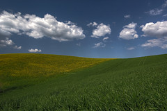 Natural wallpaper (Robyn Hooz) Tags: verde green field yellow clouds canon eos nuvole giallo tuscany filters polarizer campi gnd 600d ef1740l polarizzatore filtri
