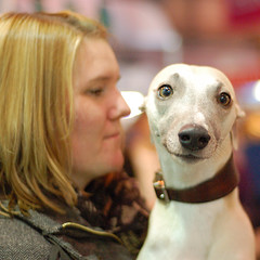 Whippet Love (whitbywoof) Tags: dog whippet pedigree crufts highqualitydogs