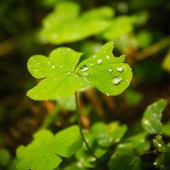 Rain Drops (JeremyMP) Tags: camping color nature rain oregon creative tamron brilliant f28 raindrop rainforrest captivating 1750mm canon7d jeremympiehler
