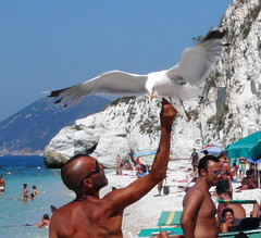 L'uomo e il gabbiano  -  The man and the gull (Ola55) Tags: sea italy beach mare gulls spiaggia gabbiani italians portoferraio isoladelba the4elements mywinners aplusphoto worldtrekker ola55 spiaggiacapobianco
