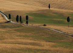 Sulla strada - On the road (da.geli) Tags: road trees italy ridleyscott tuscany cypress pienza toscana ontheroad gladiator filmlocation sullastrada ilgladiatore terrapille mygearandme mygearandmepremium mygearandmebronze mygearandmesilver mygearandmegold mygearandmeplatinum mygearandmediamond lastradadelgladiatore