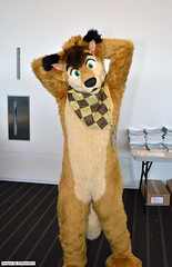 DSC_2885 (Exkhaniber) Tags: coyote 2012 kinney fursuit anthrocon canid