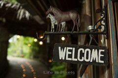 Welcome (LifeisPixels - Thanks for 3 MILLION views!) Tags: horse sign lens thailand evening photo asia candles bokeh sony south