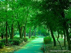 Green brightness (The imaginative landscape) Tags: tree nature japan photos  vegetation osaka fabulous footpath olympuspenep3 ealabo theimaginativelandscape fuwarysuke