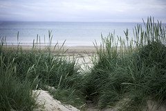 Scapa Beach, Orkney, Scotland (bm^) Tags: uk travel sea tourism beach grass scotland orkney nikon raw unitedkingdom dune zee gras reportage scapa schotland duin planart1450 orcades scapabeach d700 planar5014zf  bestandstype