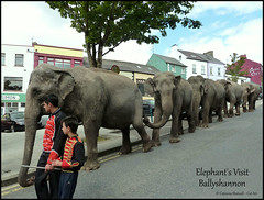 Elephant's Visit Ballyshannon (Cat-Art) Tags: ireland elephants irishart codonegal ballyshannon irishphotographer imagesofireland catshatwell catrionashatwell catart doublevisionimagescom elephantsvisitballyshannon wwwdoublevisionimageswebscom