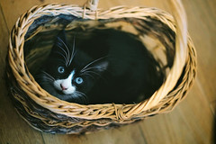 The Mighty Thor (wycombiensian) Tags: white black cute cat kitten basket thor