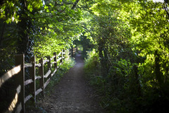 (drfugo) Tags: wood trees summer green fence sussex countryside bokeh explore shade canon5d pathway explored worthway nikon55mmf12s nikkors55mmf12typeiv