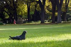 Repos, jardin du Luxembourg, Paris, le matin du 19 aot 2012 (Stphane Bily) Tags: park morning paris pigeon jardin t parc matin repos jardinduluxembourg chaleur stphanebily