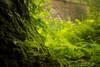 Green morning (doncan311) Tags: perú dpsgreen