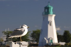 On Guard (jah32) Tags: seagulls lighthouse ontario canada birds harbour gulls greatlakes lakeontario seabirds portdalhousie