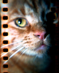 Holga 120N + 35mm film + CLS lens + flash (danielcane) Tags: pet cats pets colour eye 120 film animal animals rural cat 35mm hair fur nose sussex countryside ginger nationalpark holga eyes feline westsussex flash chinese sunny ears 200iso iso whiskers negative 35mmfilm 200 whisker ear epson analogue eastsussex southdowns gingercat sprockets 120n colournegative rebate holga120n c41 sprocketholes v500 chinesefilm holgalenses epsonv500 epsonv500scanner exposedsprockets exposedsprocketholes southdownsnationalpark sunnyfilm holgacloseuplens holgacls holgaclslensset holgaclslens workandcommute workshortfurgingercat