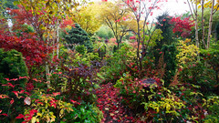 Foliage colours of autumn in our woodland garden (Four Seasons Garden) Tags: fourseasonsgarden yahoo:yourpictures=myautumn