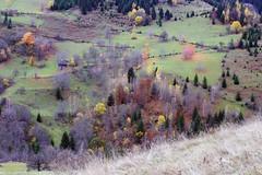Radiša Živković  - October in my memories (Radisa Zivkovic) Tags: autumn mountain fall rural forest landscape countryside nikon scenery colorful europe colours serbia d200 srbija golija planina