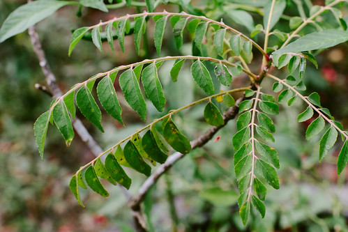 plants nature leaf october picture deepavali 2011... (Photo: JourneyToNoWhere on Flickr)