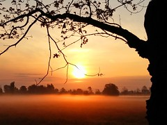 Today, very early (Tobi_2008) Tags: trees sky nature fog sunrise germany deutschland nebel saxony natur himmel sachsen tobi bume sonnenaufgang allemagne germania