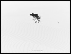 Contact Improvisation (broombesoom) Tags: bw white black holland tree blanco beach monochrome strand contrast sand noir pattern seagull dune negro zeeland structure netherland minimalism mwe blanc baum schwarz weis contactimprovisation
