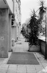 Roma vigne nuove 020 (Nonnismi) Tags: bw rome roma film perspective bn suburb periferia 400asa prospettiva grata pellicola corridoio metalgrate cementoarmato piantaornamentale viadellevignenuove